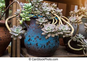 miniatuur, succulent, planten