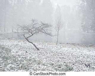 Minimalist winter landscape with two trees in the Park.