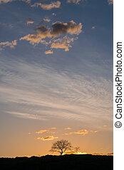 Minimalistic landscape with tree