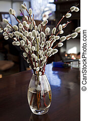 Minimalistic still life, willow blossoms in glass vase - ...