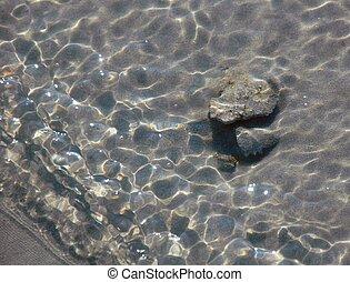 minnows, právě, namočit, těžkopádný, sea., lastury, sand., vody, vnitrozemí, ne, moře, jalový