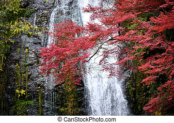 Minoh waterfall and autumn leafs in Osaka Japan