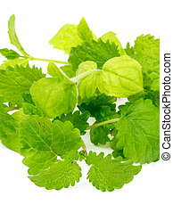 Mint and Lemon Balm - Fresh Leafs of Mint and Lemon Balm...