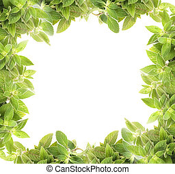 mint background - natural fresh herb background from the...