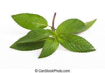 Mint close up - Fresh mint close up on white