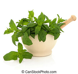 Mint Herb Leaves - Mint herb in a cream stone mortar with...
