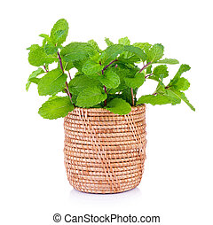 mint in the basket on white background