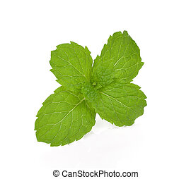 mint isolated on the white background.