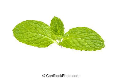 Fresh mint leaf isolated on white background .