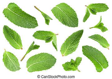 Mint leaf herb closeup collection - Mint leaf herb closeup...