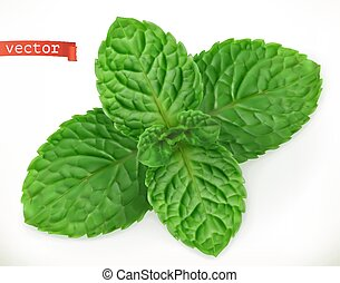 Mint leaves 3d realistic vector icon