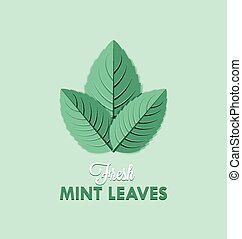 Mint leaves - Fresh mint leaves isolated on pale green...