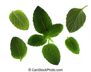 Mint leaves - Leaves of the spearmint plant, used in...