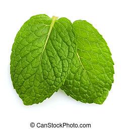 Mint leaves - Isolated macro of fresh mint leaves.
