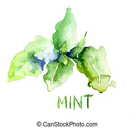 Mint leaves, watercolor illustration