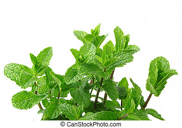 mint on the white background