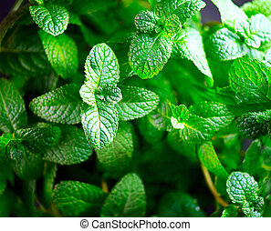 mint., organisch, bladeren, achtergrond, groeiende, fris, munt, closeup.