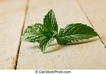 Mint - photo of fresh green mint leaves on wooden table
