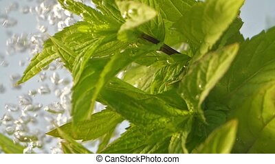 Mint plant under water - Mint herb in water- slow motion