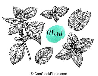 Mint sketch set - Retro style ink sketch of mint. Isolated...