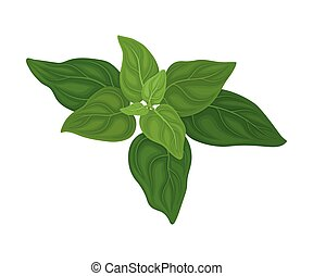 Mint Twig as Kitchen Herb for Cooking Vector Element