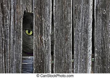 mirón, gato