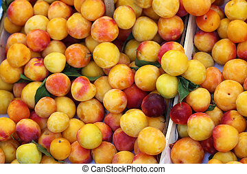 the mirabelle plum or mirabelle prune is the edible drupaceous fruit of the mirabelle prune tree