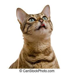mirada fija, mirar, bengala, súplica, gato