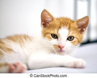 mirar, diffident, pequeño, gatito