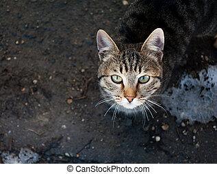 mirar fijamente, gato