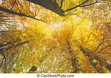 mirar hacia arriba, en, árboles, con, de par en par, angle.