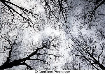 mirar hacia arriba hacerlo/serlo, cielo gris, por, ramas de árbol