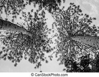 mirar hacia arriba hacerlo/serlo, el, árbol, tapas