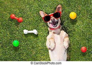 mirar, juegos, arriba, perro, dueño