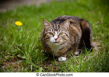 mirar, retrato, cámara, gato