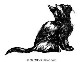 mirar, velloso, cielo, arriba, gatito