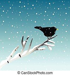 mirlo, invierno, ilustración, rama