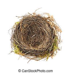 mirlo, nido, blanco, detalle, aislado