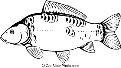 Mirror carp fish black and white