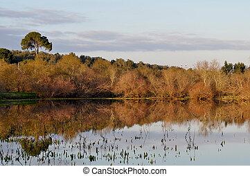 Mirror image of swamp scene