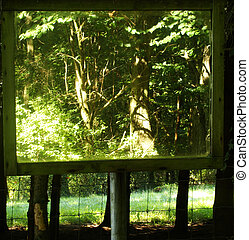 Mirror In A Forest - Mirror In A Forest Reflecting A Forest...