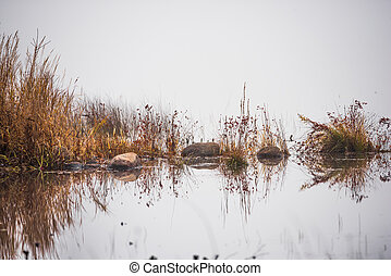 Mirror reflections on water in fog.