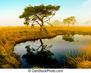 Mirrored tree Africa