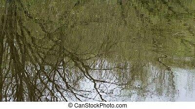 Mirroring Water Surface