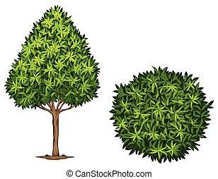 mirtillo, giapponese, pianta