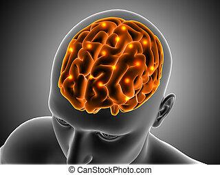 mis valeur, cerveau, figure masculine, 3d