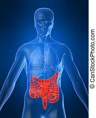 mis valeur, intestins
