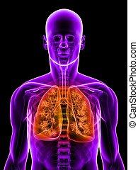 mis valeur, poumon