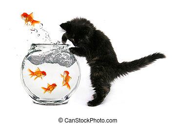 Mischeivious Kitten - Humorous Kitten Trying to Catch Gold...