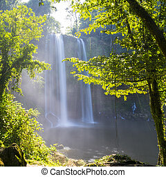 Misol Ha Waterfall Jungle